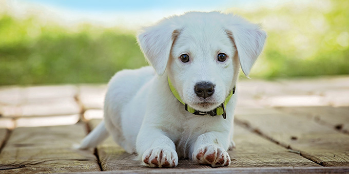 Cute puppy waiting for a new owner.